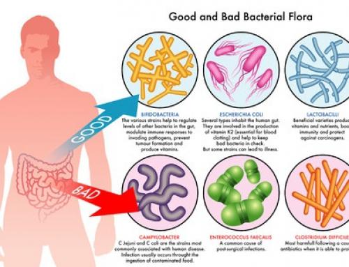 Darmflora – wichtig für Figur und Wohlbefinden